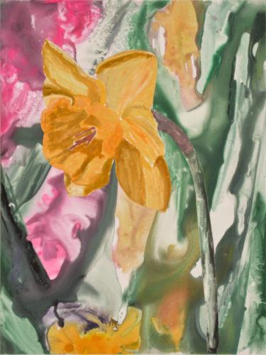 Daffodil 3 by Sari Davidson