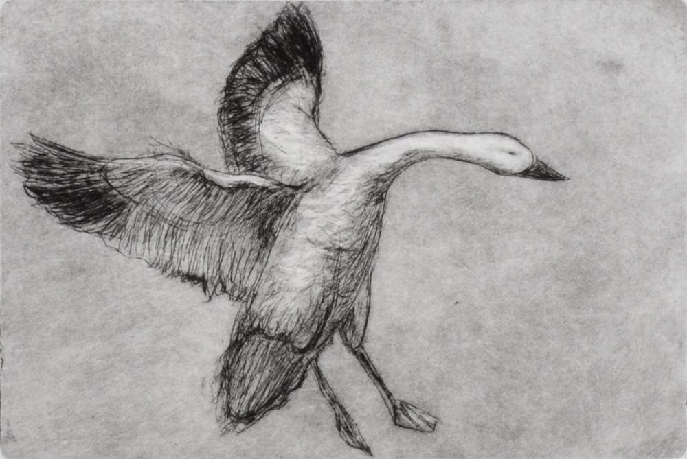 Goose by Sari Davidson