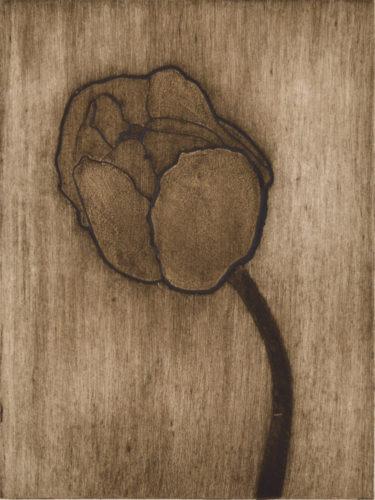 Pink Tulip 1 by Sari Davidson