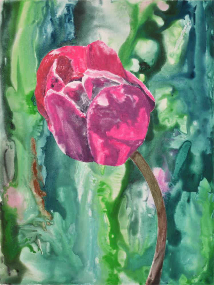 Pink Tulip 3 by Sari Davidson