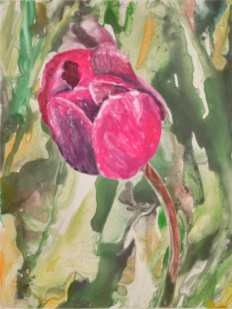 Pink Tulip 5 by Sari Davidson