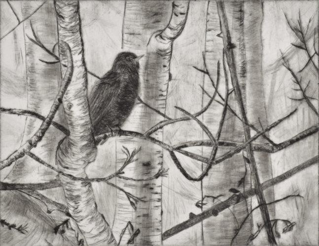 Robin 1 by Sari Davidson