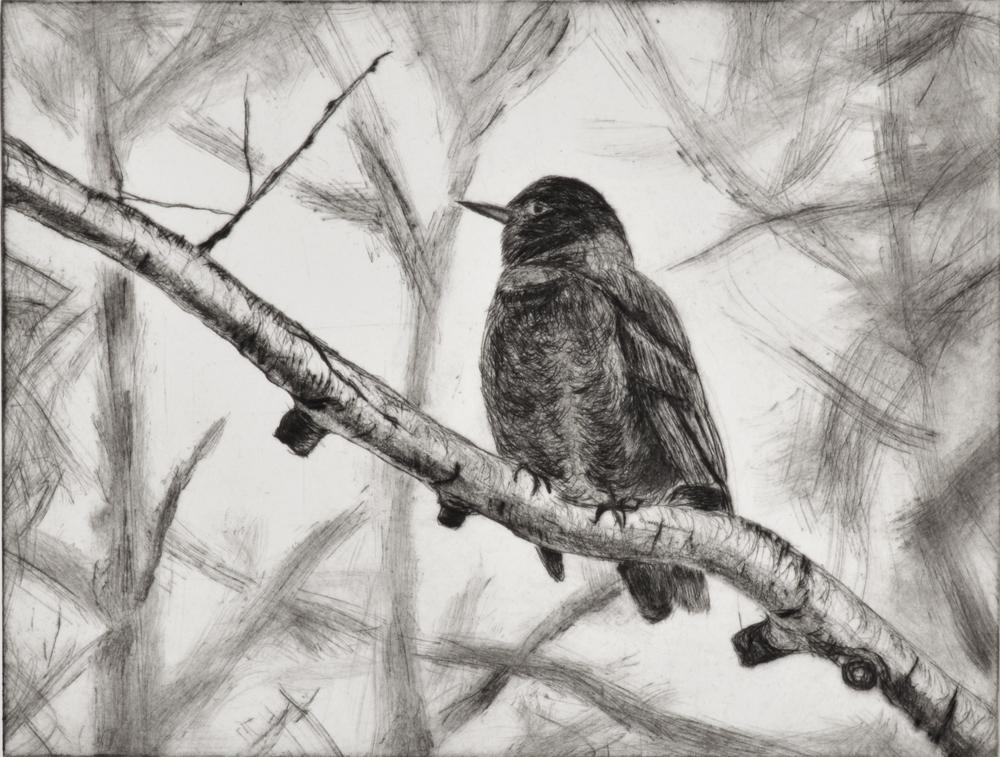 Robin 2 by Sari Davidson