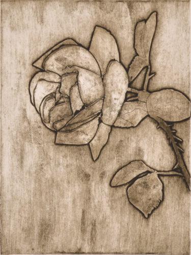Rose 1 by Sari Davidson
