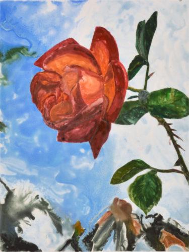 Rose 2 by Sari Davidson