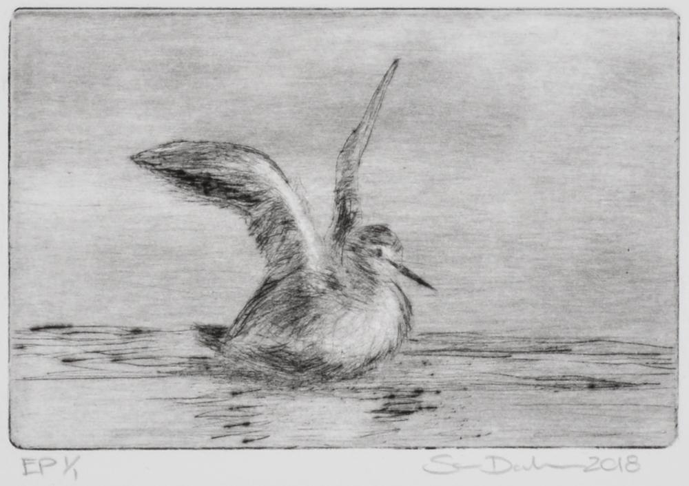 Sparrow by Sari Davidson