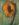 Sunflower 4 by Sari Davidson