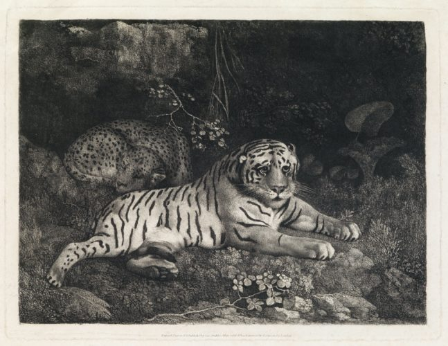 Two Tygers (or a Tiger and a Sleeping Leopard) by George Stubbs