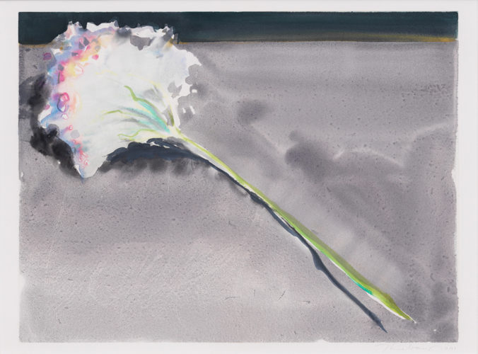 Carnation by Wayne Thiebaud
