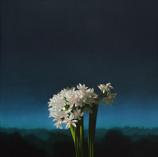 Narcissus Against Evening Sky by Bruce Cohen at Bruce Cohen