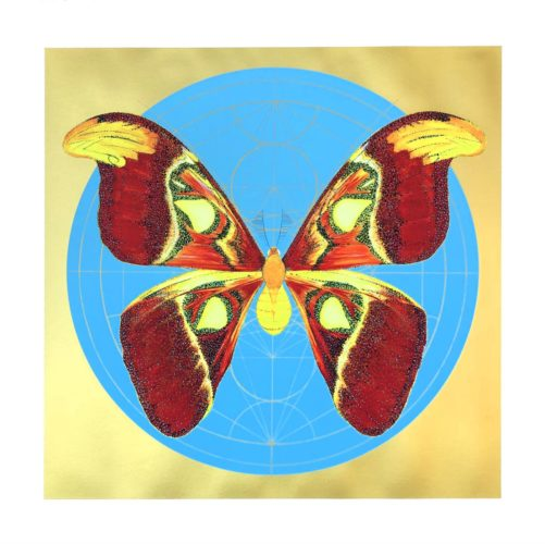 Atlas Moth (Light Blue) by Jessica Albarn