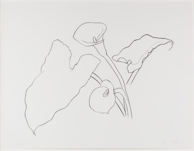 Calla Lily I, from the Series of Plant and Flower Lithographs by Ellsworth Kelly at Leslie Sacks Gallery (IFPDA)