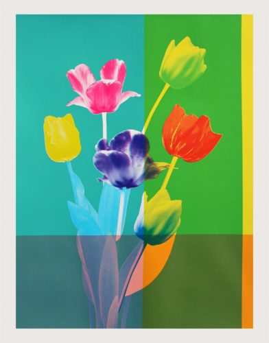 Tulips by Kate Gibb