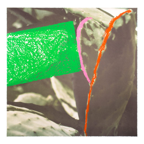 Cactus by John Baldessari