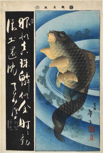 Carp (koi harimaze) by Katsushika Taito II at