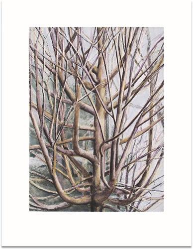 The Maple Tree by Sylvia Plimack Mangold