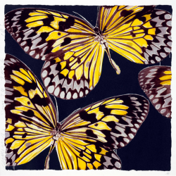 Monarchs by Donald Sultan at Maune Contemporary