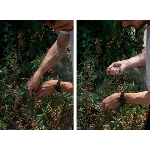 Jakob picking sage (I+II) – Diptych by Paul Hutchinson
