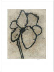Gardenia by Michelle Stuart at InvesArt Gallery