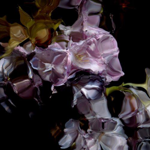 Floral Study [0448] by Alexander James Hamilton