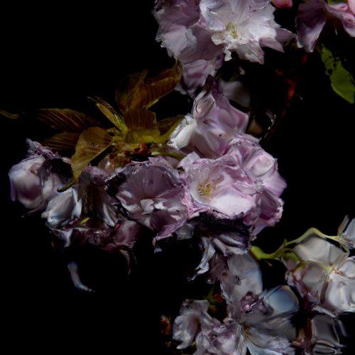 Floral Study [0459] by Alexander James Hamilton