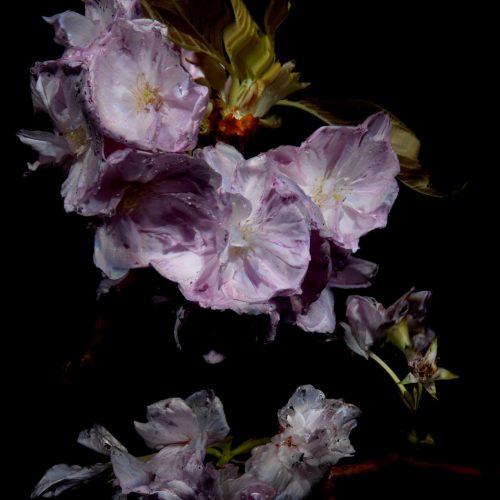 Floral Study [0464] by Alexander James Hamilton
