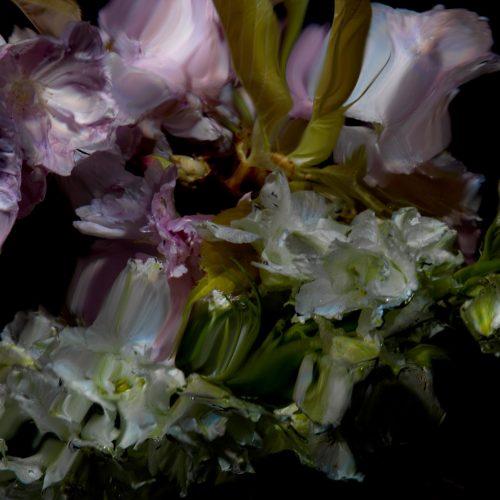 Floral Study [0498] by Alexander James Hamilton