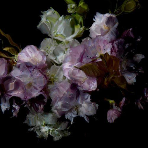 Floral Study [0503] by Alexander James Hamilton