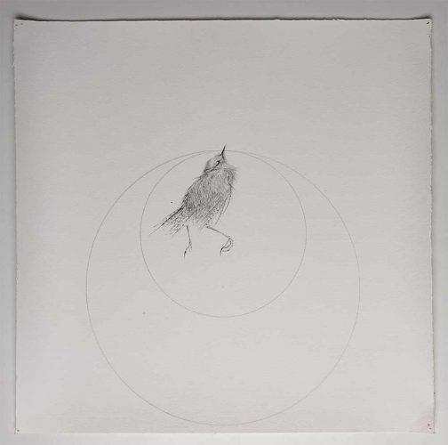 Bird by Jessica Albarn