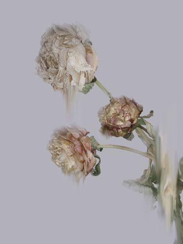 Glistening Decay by Simone Webb