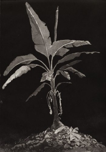 Untitled by Julia Goeldi at