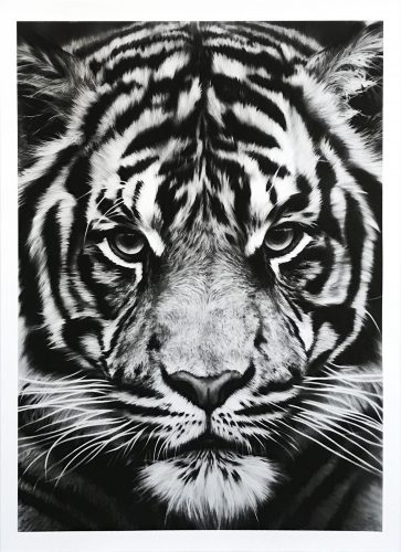 Untitled (Tiger) by Robert Longo