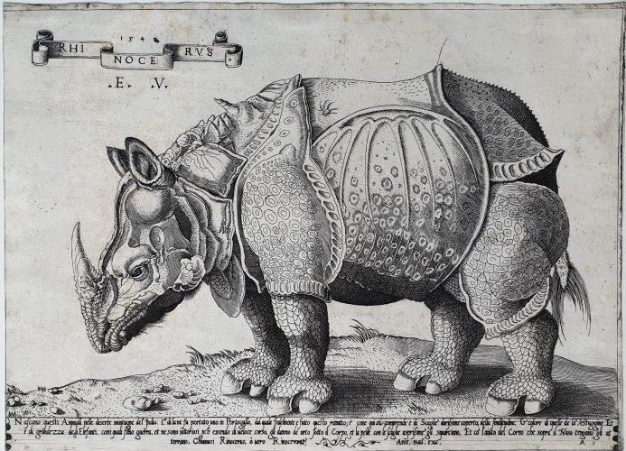 Rhinocerus by Enea Vico