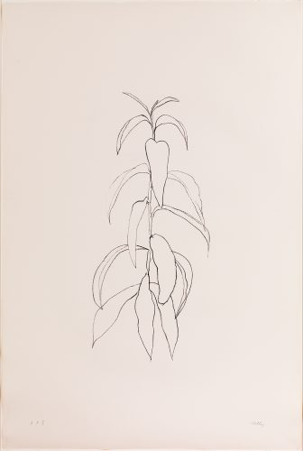 Peach Branch by Ellsworth Kelly