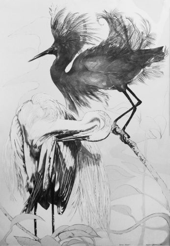 """Black Egret"" by Ellen Lanyon at"