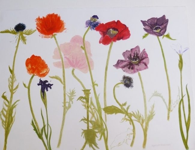 Oriental Poppies by Elizabeth Blackadder at Gwen Hughes Fine Art