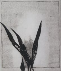 Mirror and Plant by Prunella Clough at Gwen Hughes Fine Art