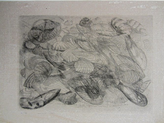 Untitled (Shell) by Evandro Carlos Jardim at