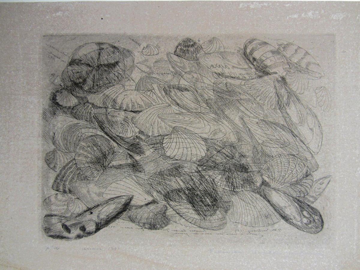 Untitled (Shell) by Evandro Carlos Jardim