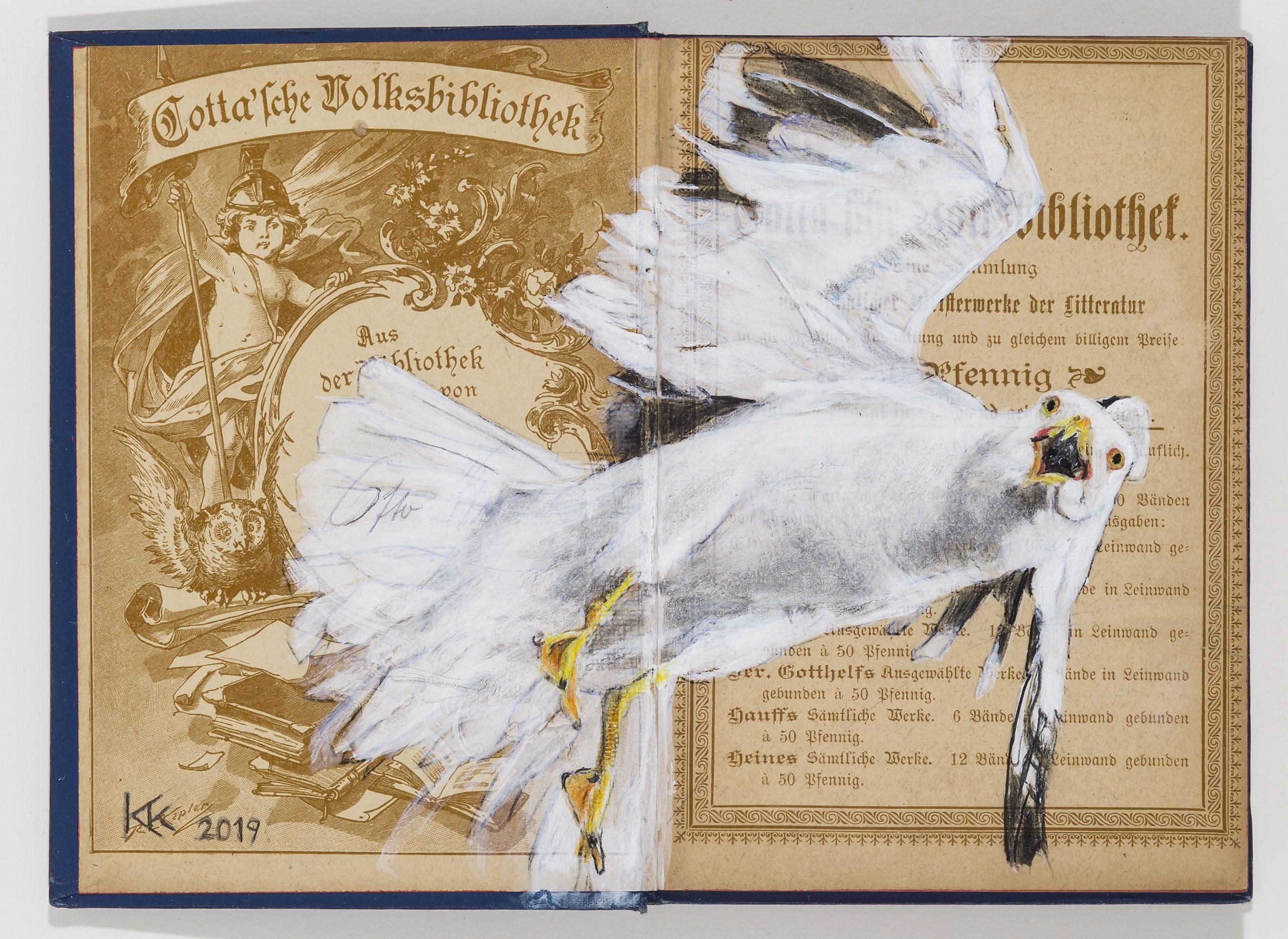 Black-headed Gull by Kristin Kolb