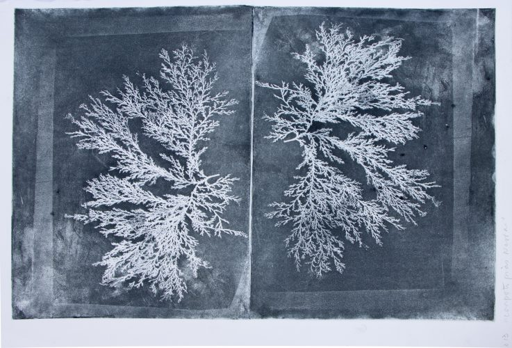 Black Coral (Seaweed inside Notebook) by Ana Kesselring at