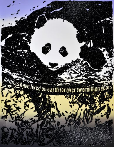 Giant Pandas Spend About 12 Hours a Day Eating Up to 15 Kilograms of Bamboo. by Rob Pruitt at