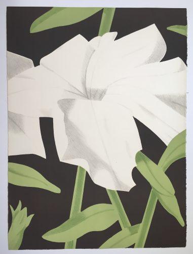 White Petunia by Alex Katz