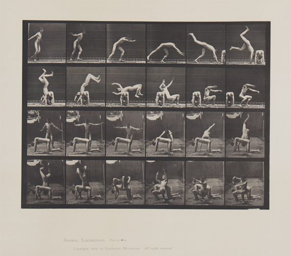 Animal Locomotion, Plate 364 by Eadweard Muybridge at