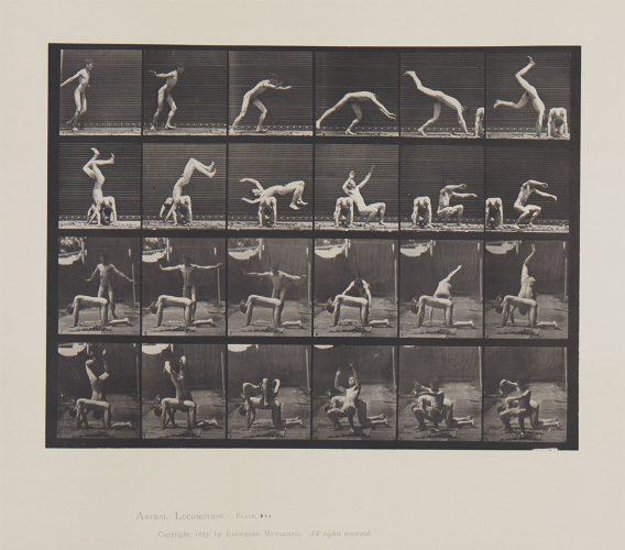 Animal Locomotion, Plate 364 by Eadweard Muybridge