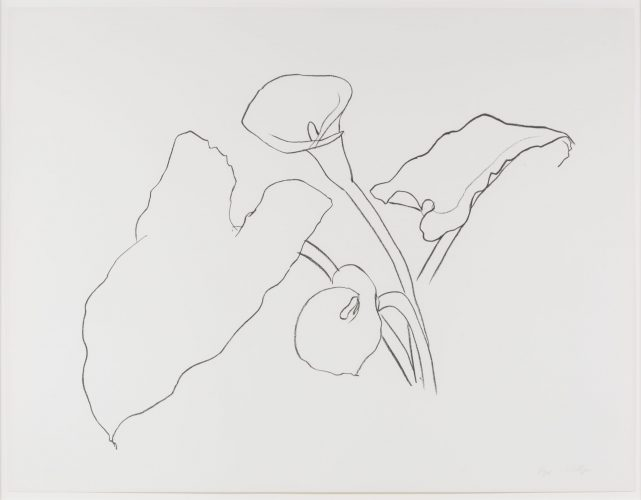 Calla Lily I, from the Series of Plant and Flower Lithographs by Ellsworth Kelly
