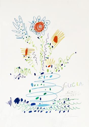 Fleurs pour U.C.L.A by Pablo Picasso
